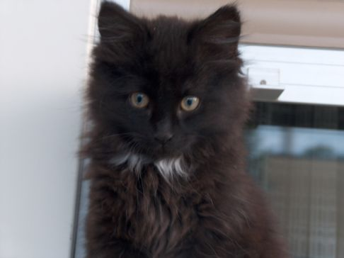 zeige deine katzenbilder auf. Black Bedroom Furniture Sets. Home Design Ideas