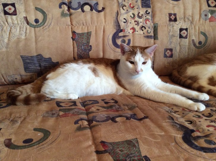 Picture of a cat / kitten / feline